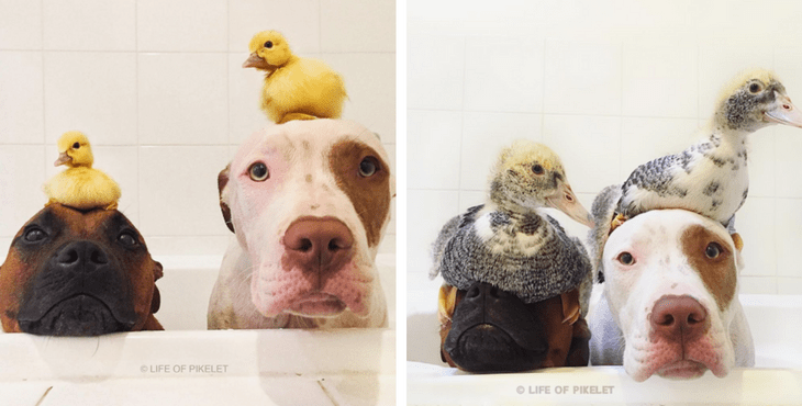 animal_friendships_1