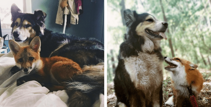 animal_friendships_4