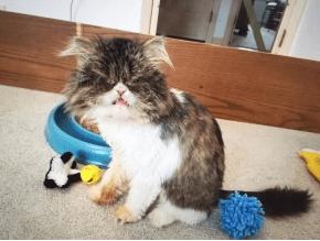 cat-lola-eye-7