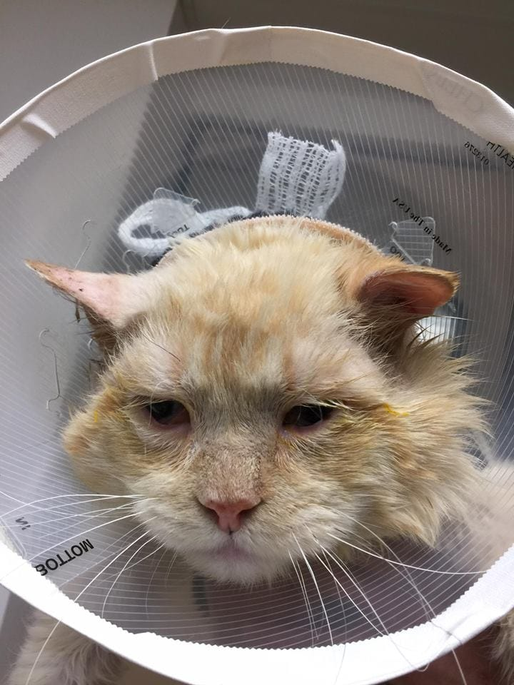 cat-nutmeg-recovery-1