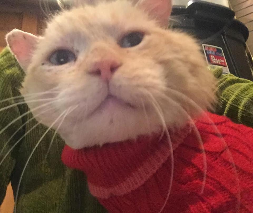cat-nutmeg-recovery-13