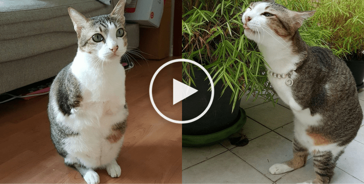 chat-sans-pattes-cover