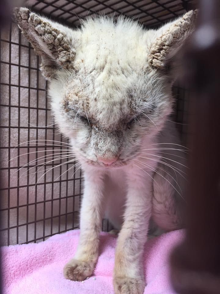 cotton_cat_eyes_rescue_3