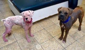 dog-asia-pink-5
