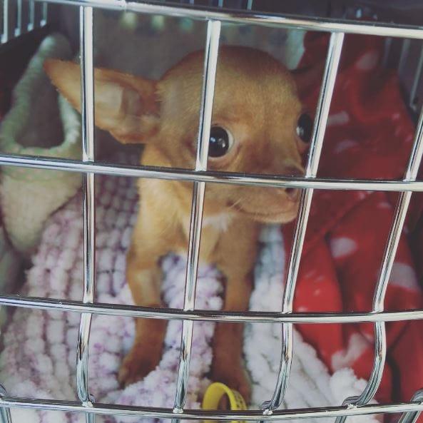 dog-brie-rescue-11