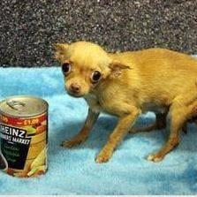 dog-brie-rescue-12