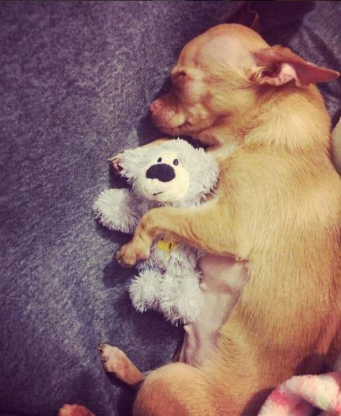 dog-brie-rescue-8