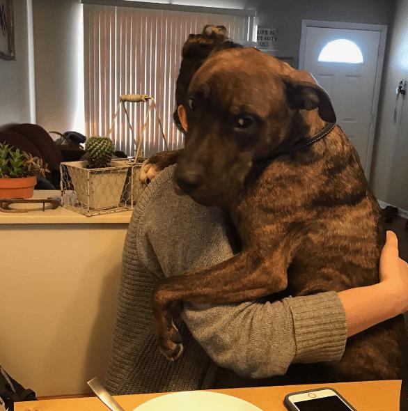 dog-kylo-hug-4