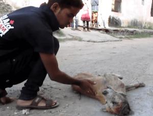 dog-rescue-india-major-sahib (1)
