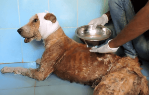 dog-rescue-india-major-sahib (4)