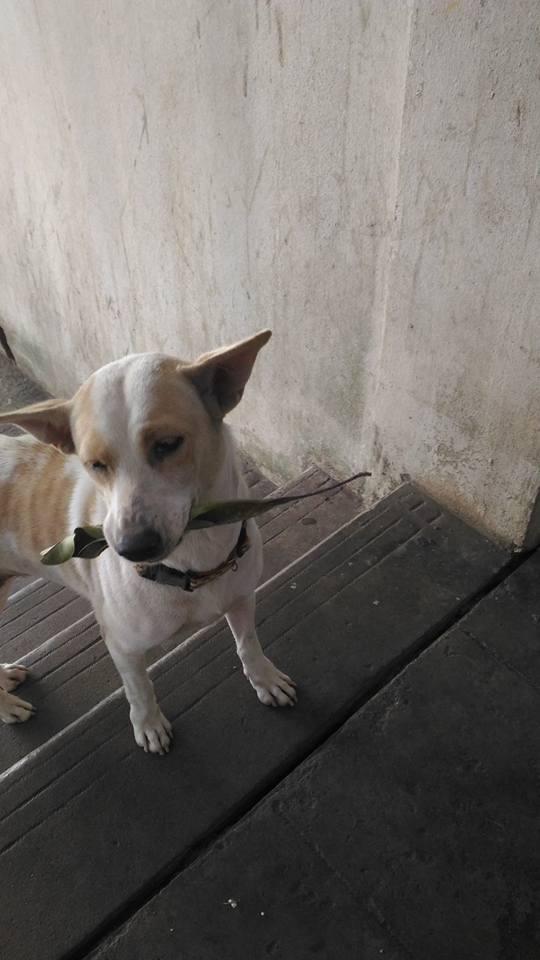 dog-tuaplu-thailand-1