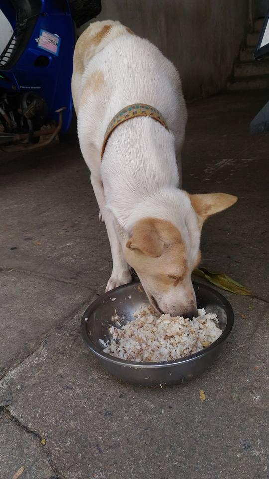 dog-tuaplu-thailand-2
