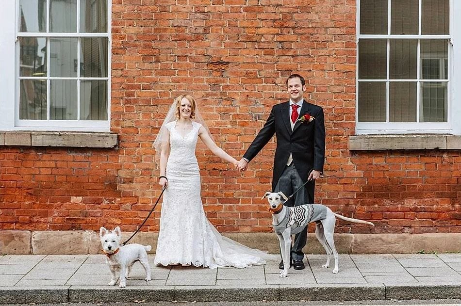 dog-wedding-recovery-2