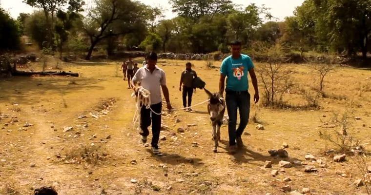 donkey-animalaid-pit-5