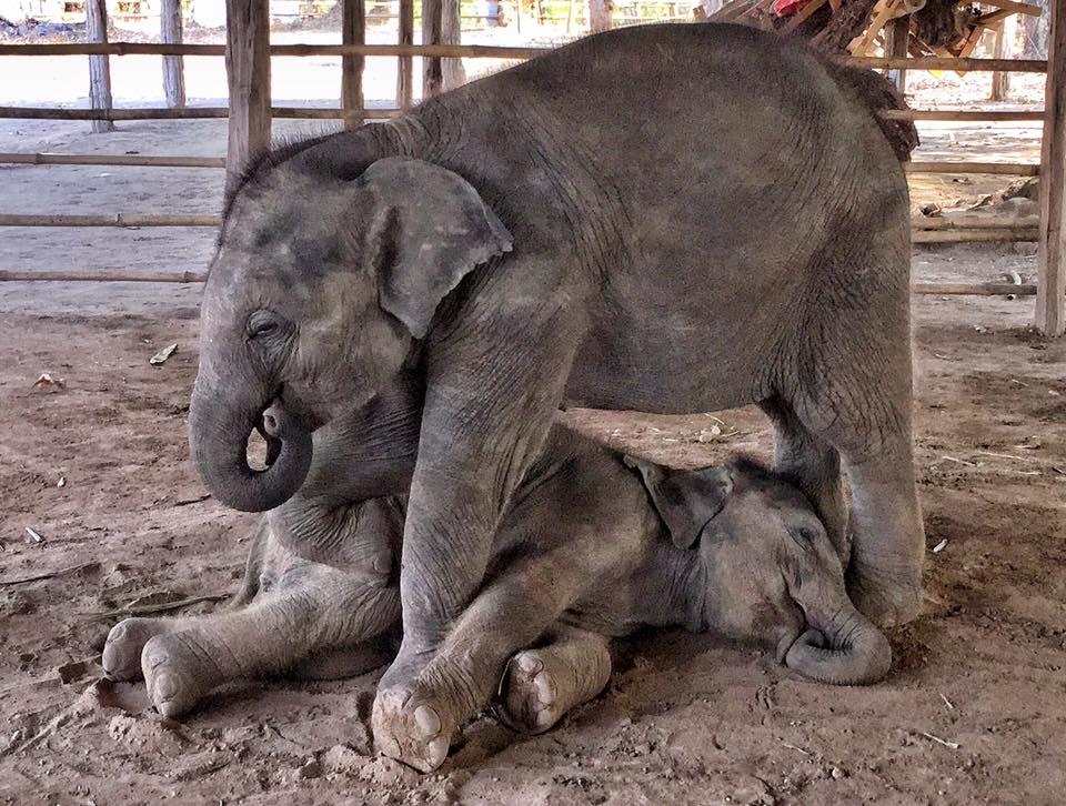 elephant_baby_rescue_milk_2