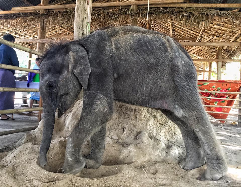 elephant_baby_rescue_milk_6