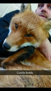 fox-basil-rescue-4