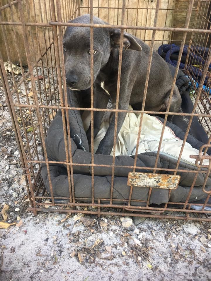 hope_puppy_rescue_florida_1