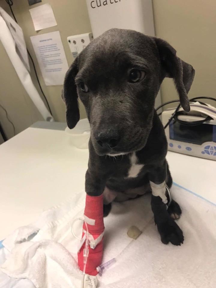 hope_puppy_rescue_florida_3