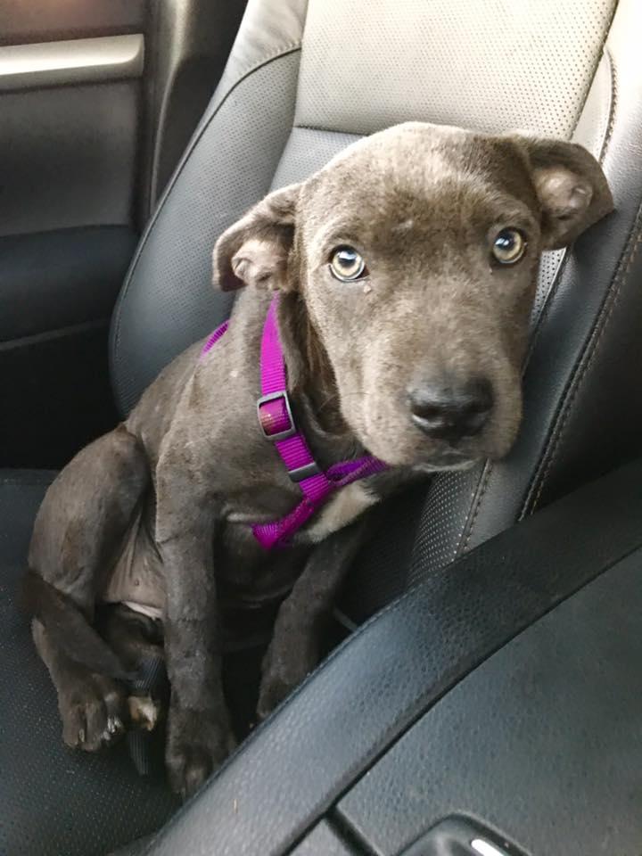 hope_puppy_rescue_florida_4