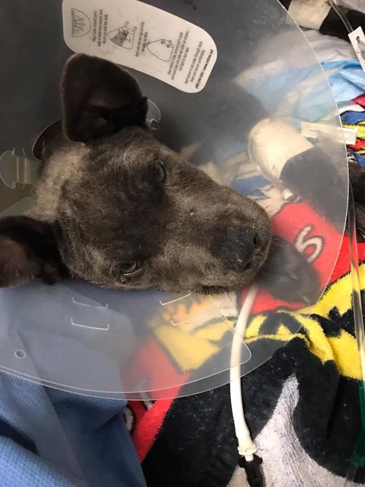 hope_puppy_rescue_florida_5