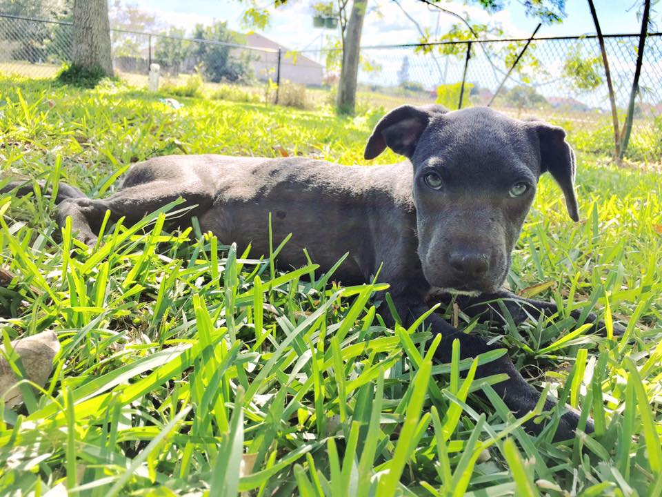 hope_puppy_rescue_florida_6