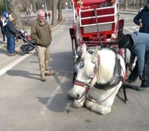 horse-max-NYC-2