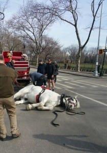 horse-max-NYC-4
