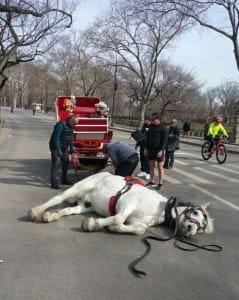 horse-max-NYC-5