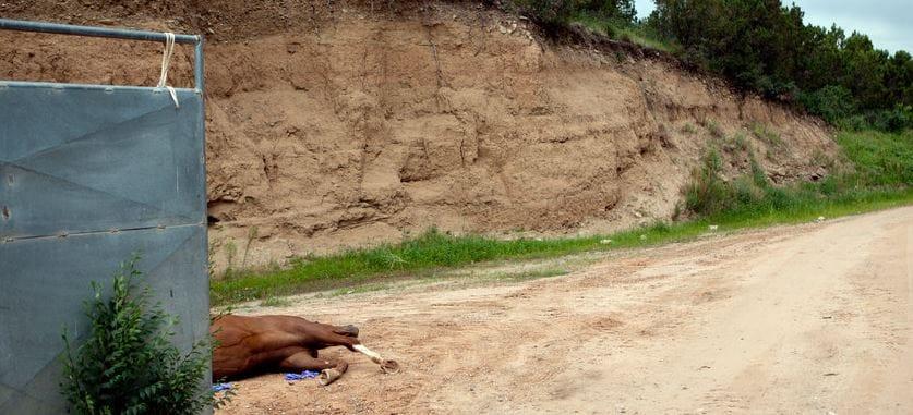 horse-racing-cruelty-2