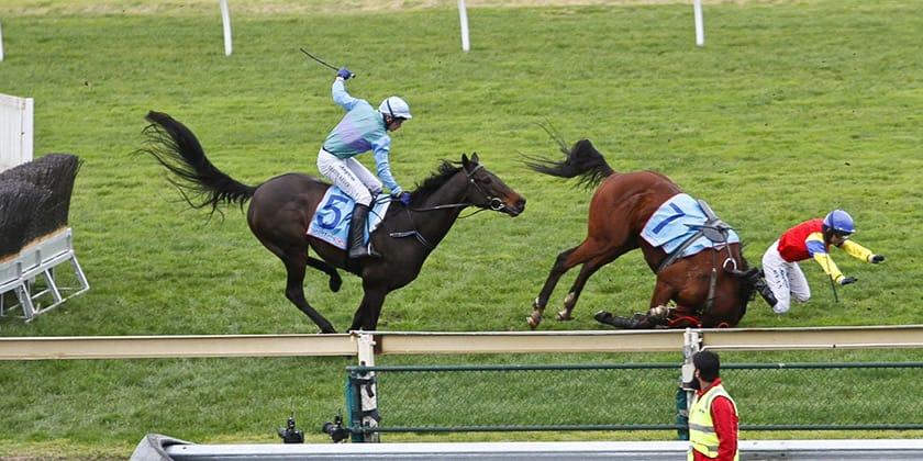 horse-racing-cruelty-3