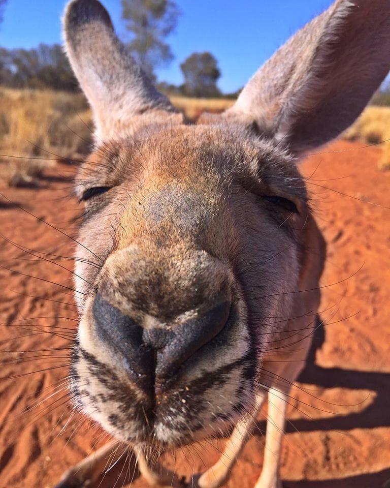 kangaroo-abi-cuddles-6