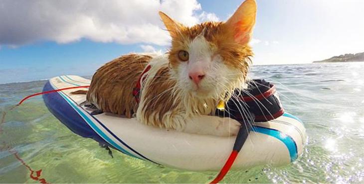 kuli-cat-surf-cover-1