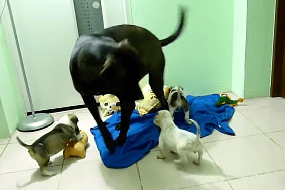 puppy_rescue_romania_5