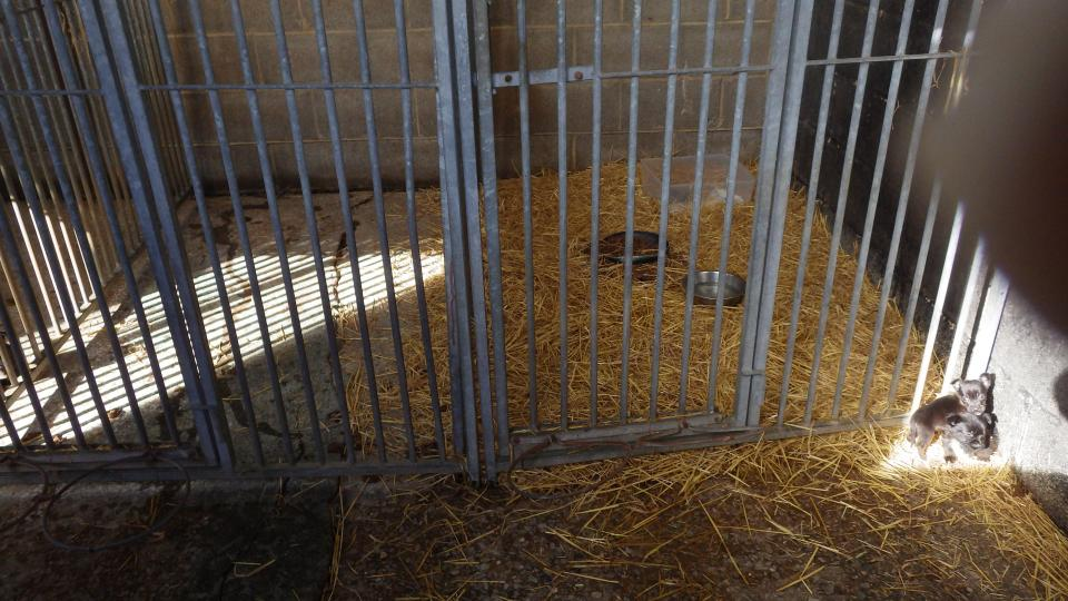puppyfarm-bradford-4