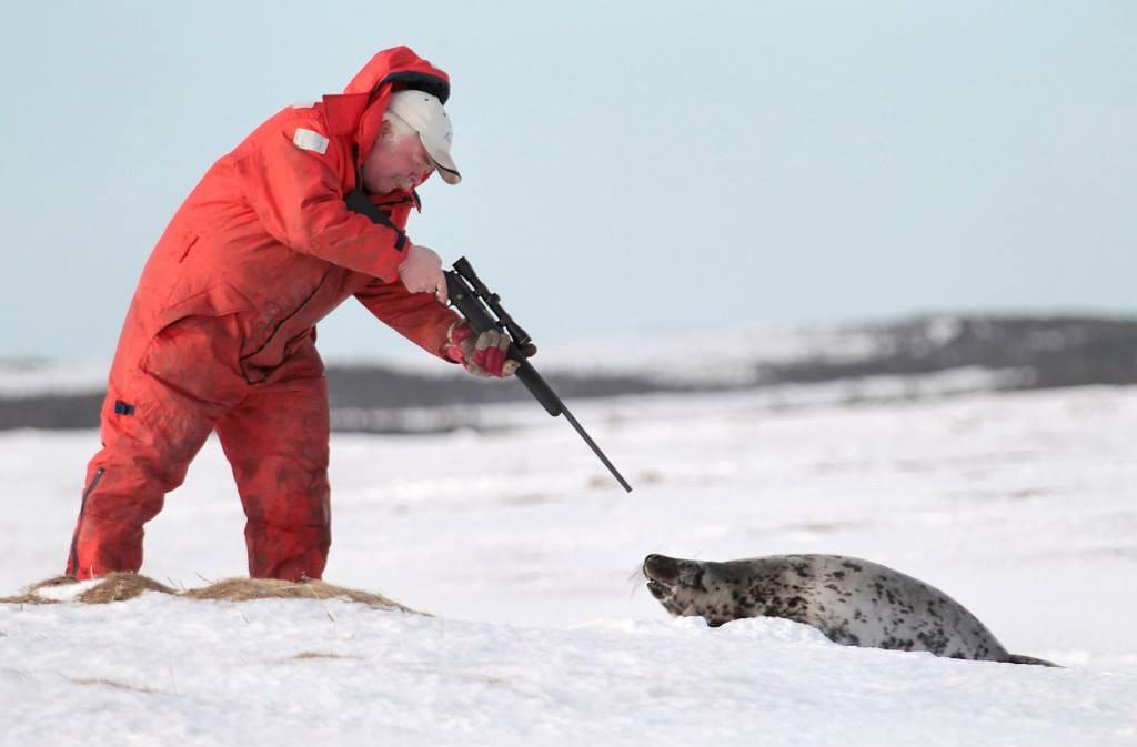 seal_hunt_fur_canada_2