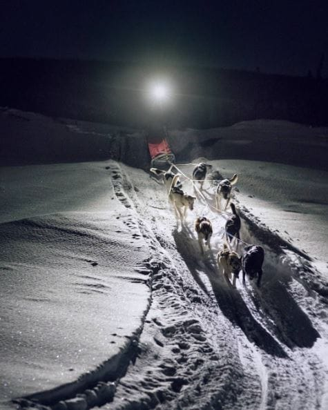 sled-dogs-iditarod-2