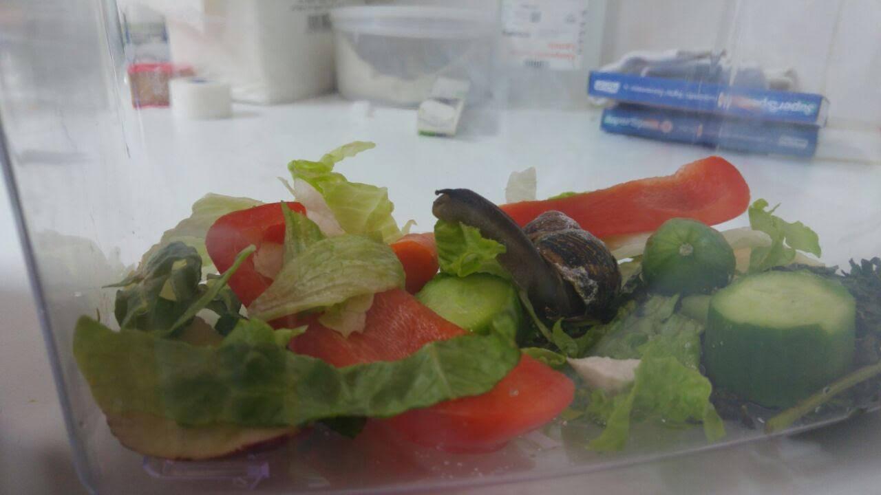 snail_shell_repair_2