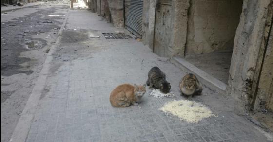aleppo-catman-puppies-11