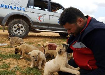 aleppo-catman-puppies-2
