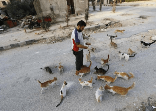 aleppo-catman-puppies-7