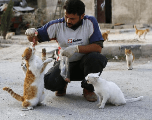 aleppo-catman-puppies-8
