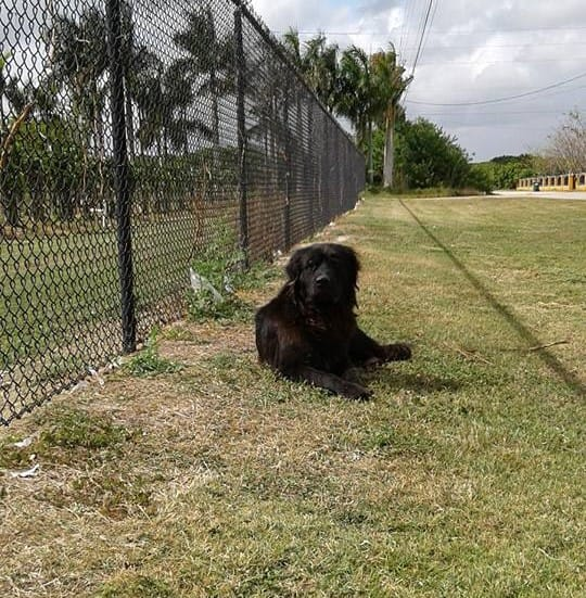 bear_dog_florida_sausages_rescue_1