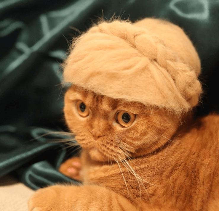 cat_fur_hats_photographer_2