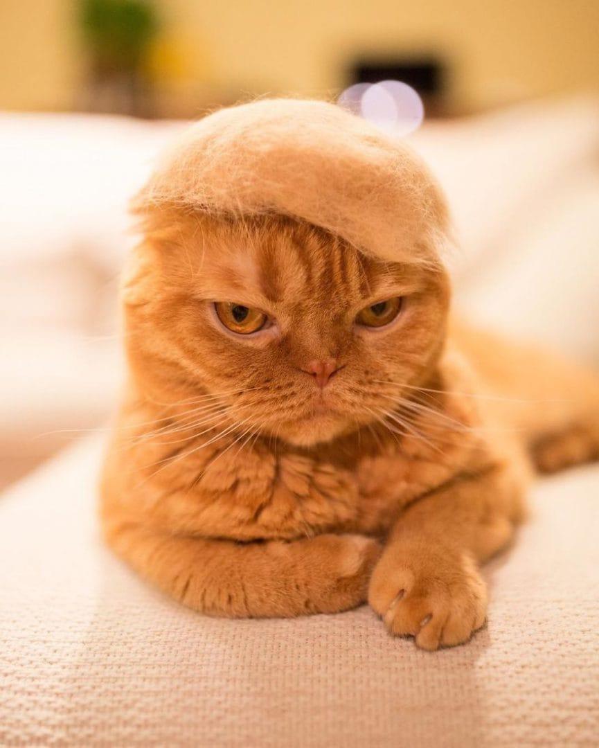 cat_fur_hats_photographer_4