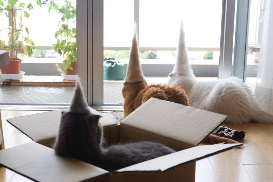 cat_fur_hats_photographer_5