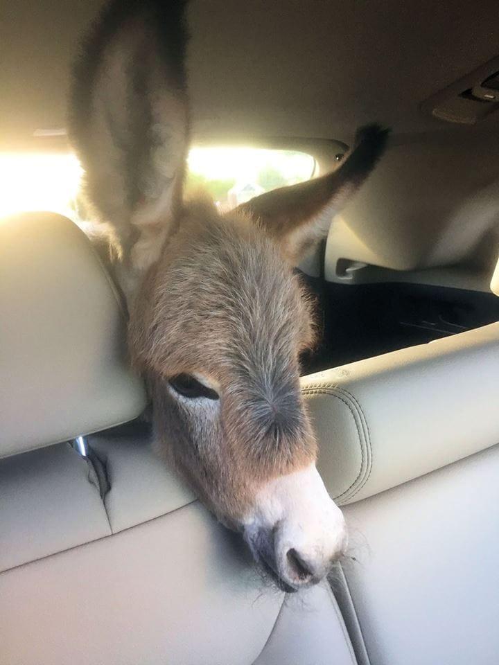 chloe-donkey-rescue-2