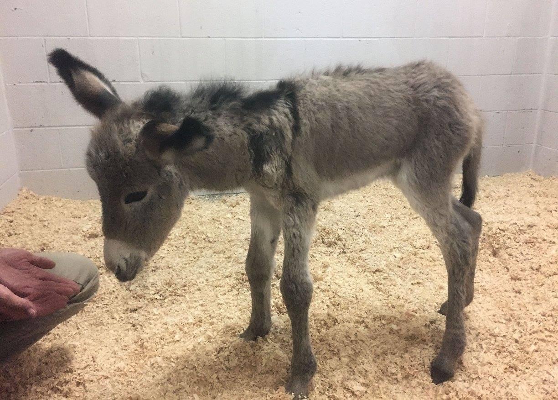 chloe-donkey-rescue-3