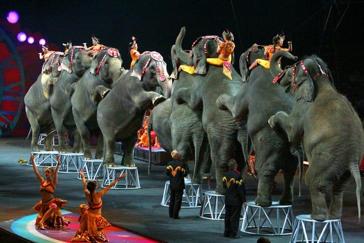 circus_ban_la_1