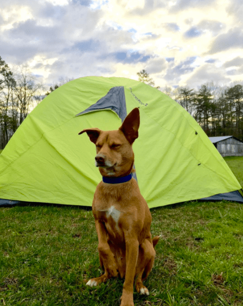 dog-blue-red-camping-6